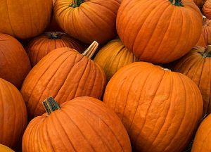 Pumpkins are delicious. They're also a perfect fuel for runners.